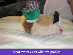 "A stuffed duck with a houndstooth hat; slide text: ""what evolves isn't what we predict"""